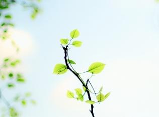 leafy-stick